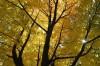 Photo: Autumn leaves