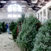 Photo: Tree sale