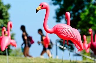 Photo: flamingos on Bascom Hill