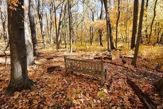 08_Arb_woods_autumn12_4674