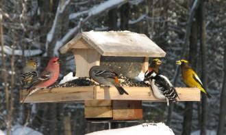 Photo: Winter birds at a bird feeder