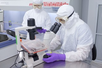 Photo: Researcher at microscope viewing stem cells