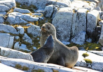 Photo: Seals perched on rocks