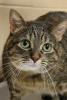 Photo: Companion cat