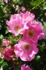Photo: Flowers in Botany Garden