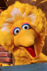 Photo: Big Bird