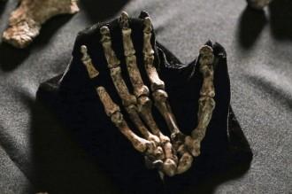 Photo: Homo naledi hand bones