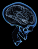 Illustration: Profile of brain in skull