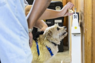 Dog being weighed on scale.