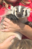 Photo: Baby Badger named Bucky