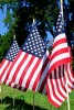Photo: American flags