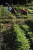 Photo: F.H. King sustainable garden