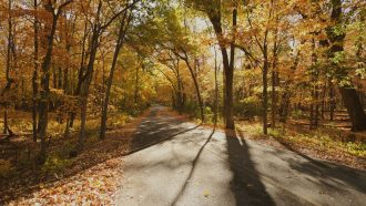 Photo: Tree-lined trail through Arboretum in fall